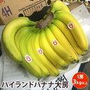 【フィリピン産】ハイランドバナナ大房1個 バナナ 贈答用 業務用 ばなな ハイランド高地栽培 大房