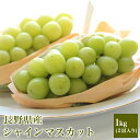 長野県産、山梨県産 シャインマスカット 1.2キロ (2房入り)ぶどうシャインマ