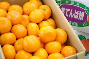 おてんば娘みかん販売 愛知県蒲郡産 お歳暮みかん通販でお取り寄せ 糖度12度以上 5kg S〜L