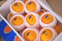 デリッシュネーブルオレンジ 愛媛県中島産 約5kg 約16玉〜約24玉