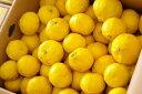 黄金柑(おうごんかん)取寄販売 爽やかな香りが特徴のゴールデンオレンジを通販で。約5kg 約50玉�約90玉 静岡・他産地