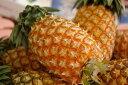 沖縄スナックパイン取寄販売 ボゴール種国産パイナップルを通販で。8本 沖縄県産