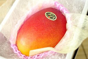 太陽のタマゴ 大玉1玉
