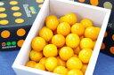 宮崎金柑たまたまエクセレント通販 糖度約18度の完熟きんかんを販売取寄。化粧箱 約1kg 約40玉 宮崎産 ランキングお取り寄せ