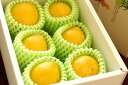 光李(ひかり) すもも李通販 黄金色プラムで山形県の新品種販売 お取り寄せ 約8玉前後