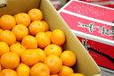 美柑王みかん販売 愛媛南農協 みかんおう蜜柑御歳暮通販でお取り寄せ 糖度約12度 5kg S〜L