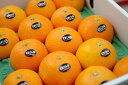 ショッピング紅マドンナ 紅まどんな通信販売 お歳暮に愛媛県ゼリーの様な食感が特徴の柑橘を販売取寄。約10玉〜約15玉