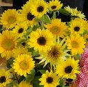 ■送料無料■花束orアレンジを選んでね♪太陽の光をたっぷり浴びたヒマワリど?んと25本!まるでひまわり畑♪【画像配信】