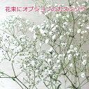 【生花】花束にオプション用のカスミソウ価格はカスミソウ1本分です【花 ギフト 誕生日】【楽ギフ_メッセ入力】【HLS_DU】