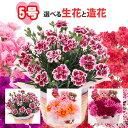 母の日 5号カーネーション選べる生花と造花