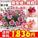 母の日 カーネーション5号選べる生花と造花プレゼント 花 ギ...