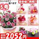 おくれてごめんね母の日 カーネーション5号選べる生花、造花プレゼント 花 ギフト
