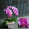 ガーベラの花束のイメージ