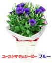ユーストマチェリービー(鉢物トルコキキョウ)ブルー4号バスケ...