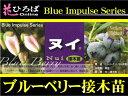 �֥롼�٥ ���� �̥� �Ρ�����ϥ��֥å���ϡ��ܤ����� �֥롼�٥�ġڥ֥롼����ѥ륹�� blueberry