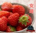 いちご 苗 女峰 ( にょほう ) 3号ポット苗イチゴ 苺