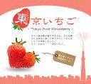 いちご 苗 【四季成り性】東京いちご ( 純ベリー2 ) 3号ポット苗 イチゴ 苺