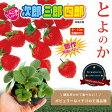 いちご 苗 【次郎三郎四郎のいちご苗】とよのか 3号ポット苗 【小梱包】イチゴ 苺