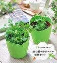 四つ葉のクーロバー幸せを運ぶ 四つ葉のクローバー栽培セット (種)ギフト ガーデニング インテリア雑貨【ドリームワンダーボックス対象外】