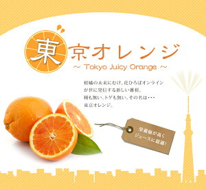 かんきつ オレンジ