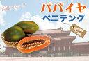 パパイヤ ベニテング ポット苗 沖縄県産 熱帯果樹