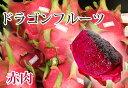 ■沖縄産■ドラゴンフルーツ 【赤肉】 ポット苗