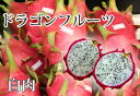 ■沖縄産■ドラゴンフルーツ 【白肉】 ポット苗