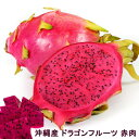 ドラゴンフルーツ 赤肉 ポット苗 沖縄県産 熱帯果樹