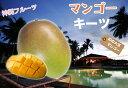 ■沖縄産■マンゴー 【キーツ】 接木大苗