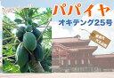 ■沖縄産■パパイヤ 【オキテング25号】 ポット苗
