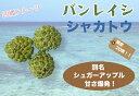 ■沖縄産■シャカトウ (バンレイシ) (シュガーアップル)7号ポット大苗