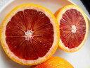 ブラッドオレンジ タロッコ 1年生 接ぎ木 苗