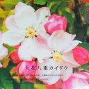 大花八重カイドウ2年生接ぎ木苗庭木落葉樹シンボルツリー【観賞花木】