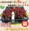 ■送料込み■【 開運オーガニックセット 】お多福南天(オタフクナンテン)5本と有機液肥のセット 庭木