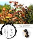 ■野生のブルーベリー■ ナツハゼ 根巻き苗 庭木 落葉樹 低木 生垣 シンボルツリー 紅葉
