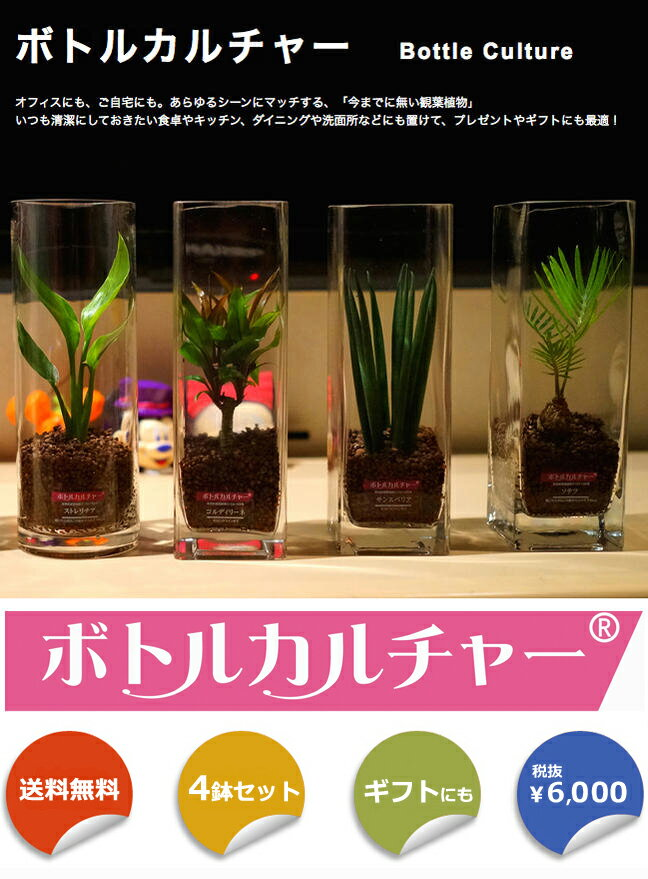 送料無料観葉植物4本セットボトルカルチャー(インテリアグリーン)選べる2タイプハイドロカルチャー/水