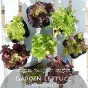 リーフレタス 苗 ガーデンレタス 8品種セット 3号ポット苗 野菜苗