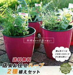 ハーブ 苗 寄せ植え【送料無料】 店長お任せ寄せ植えセット (鉢カバー付)