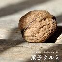カシクルミ (菓子胡桃) 1年生苗 果樹苗木 果樹苗 かしくるみの木