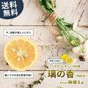送料無料 レモンの木璃の香 (りのか) スリット鉢植え 苗果樹苗