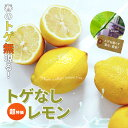 送料無料 レモン 苗 超特価トゲなしレモン 1年生 接ぎ木 苗