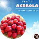 ■沖縄産■アセロラ 7号ポット大苗