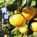 【みかん苗木】 青島温州みかん 1年生接ぎ木苗 果樹苗木 柑橘