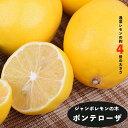 わい性レモンの木 【YDジャンボレモン ポンテローザ】 1年生接木苗