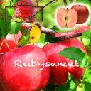 りんご 苗木 リンゴ YDルビースイート PVP 1年生 接ぎ木 苗 果樹 果樹苗木