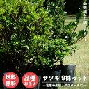 【送料無料】 サツキ 4号ポット苗 品種はおまかせ 9株セット