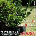 サツキツツジ 【送料無料】 サツキ 4号ポット苗 品種はおまかせ 9株セット 庭木 常緑樹 グランドカバー 低木