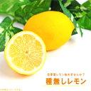 【レモン苗木】 種無しレモン (シードレスあや) 1年生接ぎ木苗 檸檬