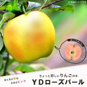 りんご 苗木 リンゴ YDローズパール PVP 1年生 接ぎ木 苗 果樹 果樹苗木