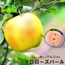 りんご 苗木 YDローズパール PVP 1年生 わい性台木 接ぎ木 苗